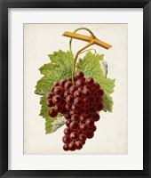 Framed Antique Fruit III