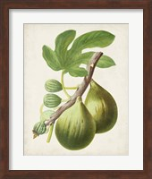 Framed Antique Fruit IV