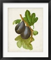 Framed Antique Fruit VI