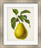 Framed Antique Fruit VII