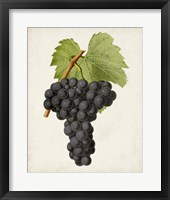 Framed Antique Fruit VIII