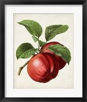Framed Antique Fruit X