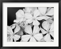Framed Botanical Under Cold Moonlight I