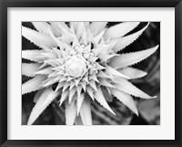 Framed Botanical Under Cold Moonlight II