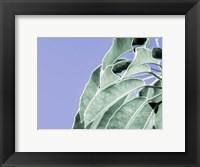 Framed Clear Leaves on Blue I