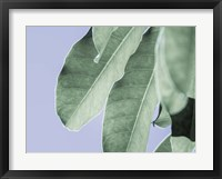 Framed Clear Leaves on Blue II