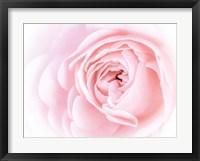 Framed Pretty Pink Blooms I