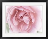 Framed Pretty Pink Blooms II
