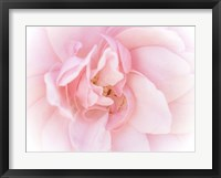 Framed Pretty Pink Blooms III