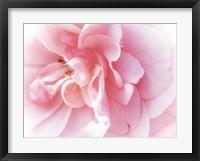 Framed Pretty Pink Blooms IV