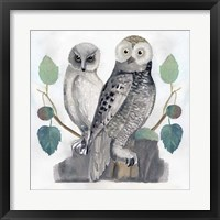 Framed Traditional Owls I