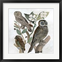 Framed Traditional Owls II