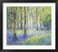 Framed Bluebell Woods