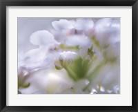 Framed Mist of Lilac I