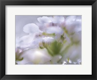 Framed Mist of Lilac I