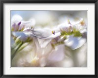 Framed Mist of Lilac II