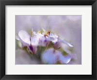 Framed Mist of Lilac III