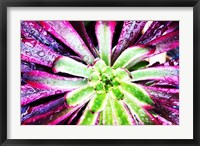 Framed Bright Exotic I