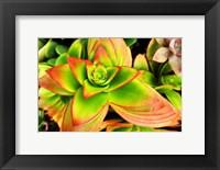 Framed Bright Exotic II
