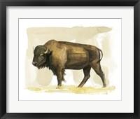 Framed Bison Watercolor Sketch II
