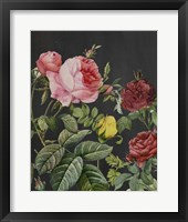 Framed Redoute's Bouquet I