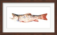 Framed Freckled Trout I