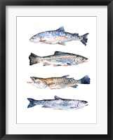 Framed Stacked Trout II