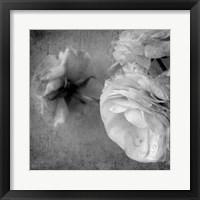 Framed Dark Ranunculus III