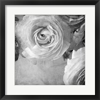 Framed Dark Ranunculus IV