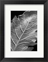 Framed Striking Leaf I