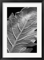 Framed Striking Leaf I