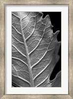 Framed Striking Leaf II