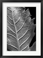 Framed Striking Leaf II