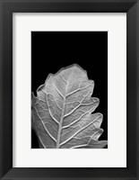 Framed Striking Leaf III
