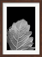 Framed Striking Leaf III