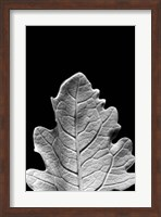 Framed Striking Leaf IV