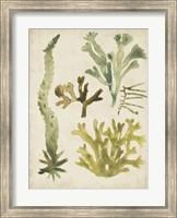 Framed Vintage Sea Fronds I