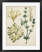 Framed Vintage Sea Fronds II