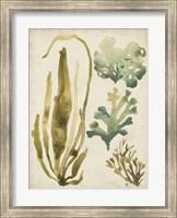 Framed Vintage Sea Fronds III