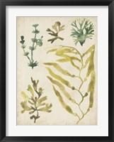 Framed Vintage Sea Fronds IV