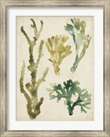 Framed Vintage Sea Fronds V