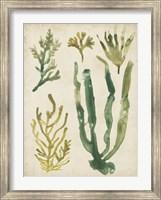 Framed Vintage Sea Fronds VI