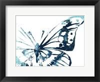 Framed Butterfly Imprint V