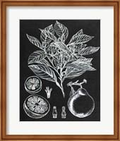 Framed Citrus Botanical Study I