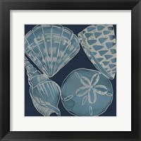 Framed Marine Shells IV