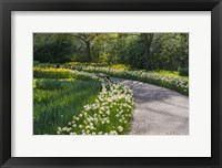 Framed Sunlit Path In Daffodil Garden