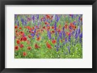 Framed Poppy Field, Mount Olive, North Carolina