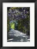 Framed Wisteria Arbor In Garden, Austria, Vienna, Schonbrunn Palace