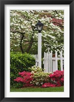 Framed Pickett Fence, Lamp, Azaleas, And Flowering Dogwood Tree, Louisville, Kentucky