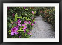 Framed Rhododendron Along Pathway, Magnolia Plantation, Charleston, South Carolina
